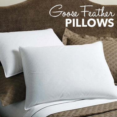 Goose Feather Pillows Animal Welfare : Royal Comfort 1000GSM Goose Feather & Down Pillows Buy Intro Mails