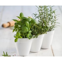 White Ivy Herb Planter with Miniature Leaf Cutters