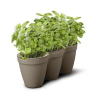 Grey Ivy Herb Planter x3 and Miniature Leaf Cutters